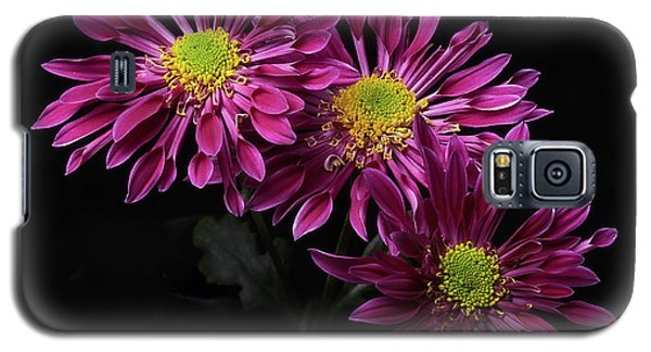 Chrysanthemum 'saba' Galaxy S5 Case