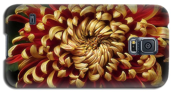 Chrysanthemum 'st Tropez' Galaxy S5 Case