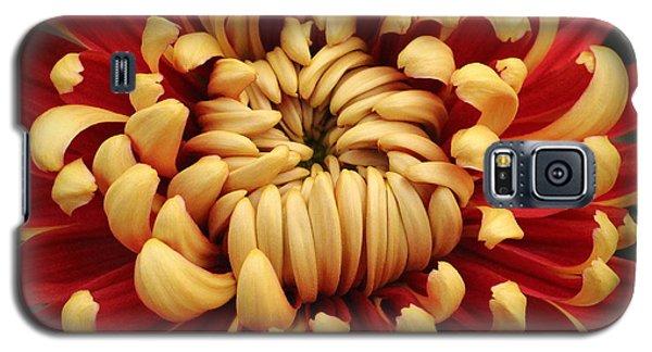 Chrysanthemum In Full Bloom Galaxy S5 Case