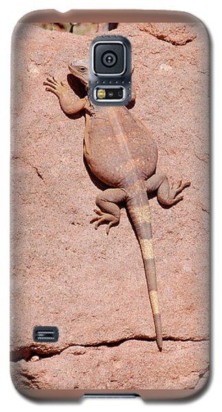 Chuckwalla, Saurolamus Ater Galaxy S5 Case