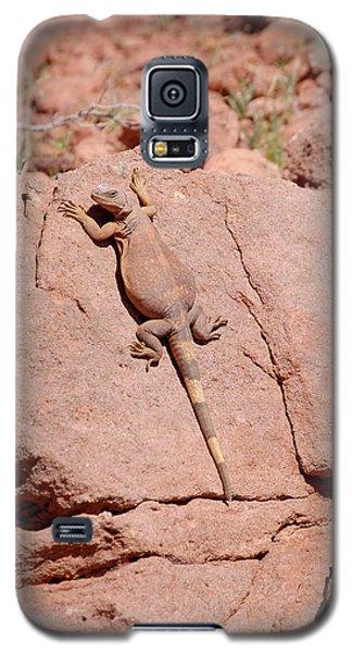 Chuckwalla, Sauromalus Ater Galaxy S5 Case