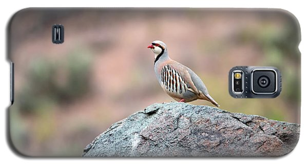 Galaxy S5 Case featuring the photograph Chukar Partridge 2 by Leland D Howard