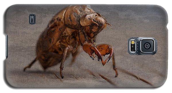 Cicada Shell Galaxy S5 Case by Tom Mc Nemar