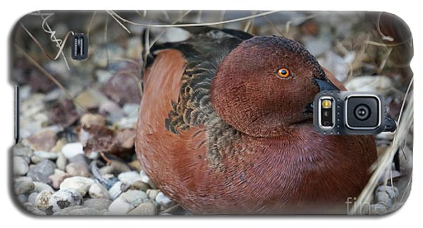 Cinnamon Teal Galaxy S5 Case