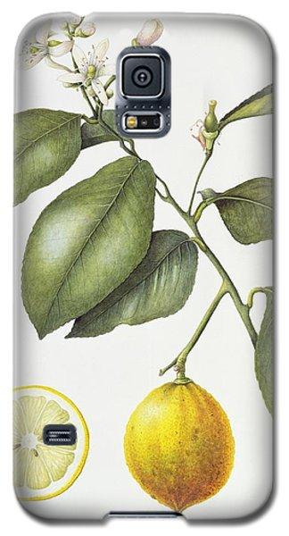 Citrus Bergamot Galaxy S5 Case