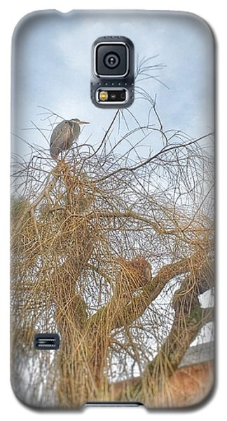 City Bird  Galaxy S5 Case by Regina Avila