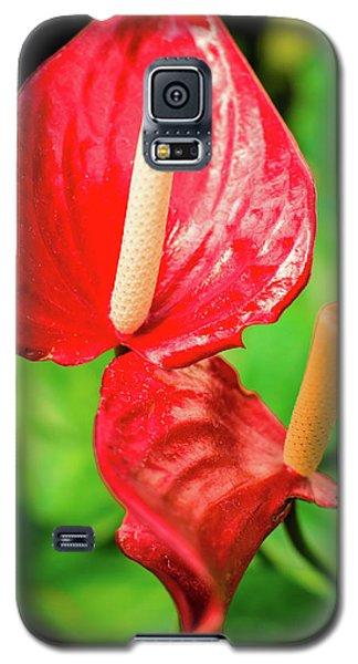 City Garden Flowers Galaxy S5 Case