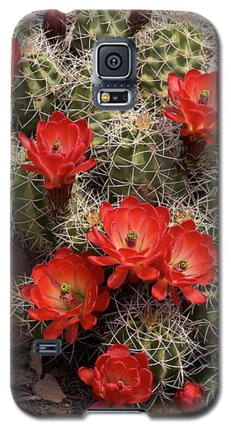 Claret Cup Cactus Galaxy S5 Case