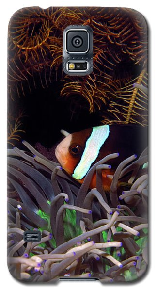 Clark's Anemonefish, Indonesia 2 Galaxy S5 Case
