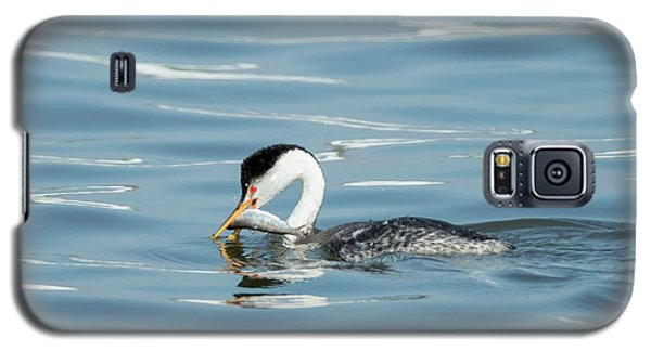 Galaxy S5 Case featuring the photograph Clarks Grebe by Everet Regal