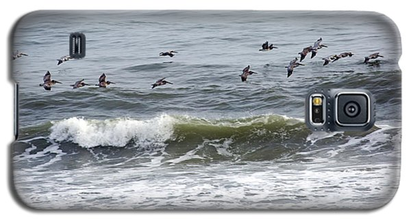 Classic Brown Pelicans Galaxy S5 Case by Betsy Knapp