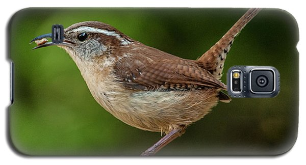 Classic Carolina Wren Galaxy S5 Case