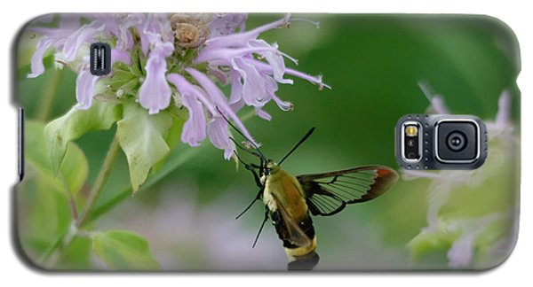 Clearwing Moth Galaxy S5 Case