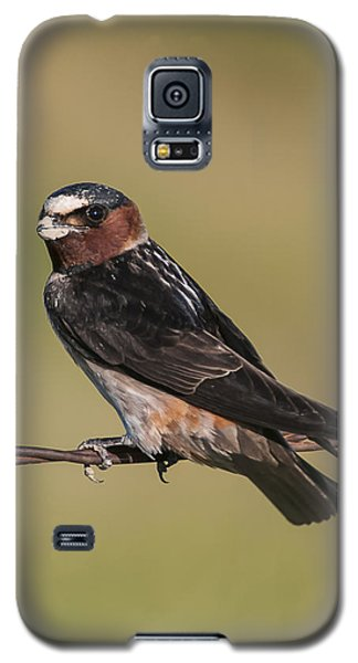 Galaxy S5 Case featuring the photograph Cliff Swallow by Gary Lengyel