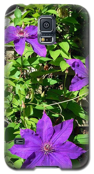 Galaxy S5 Case featuring the photograph Climbing Clematis by Susan Carella
