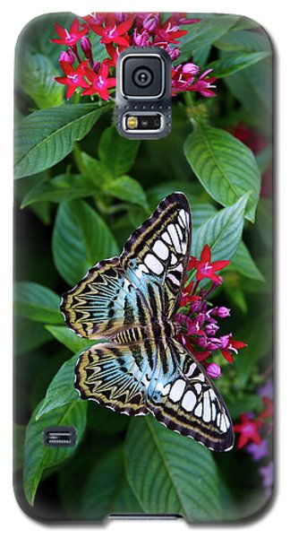 Clipper Butterfly On Star Flower Galaxy S5 Case