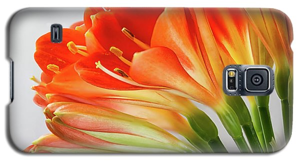 Clivia Miniata 2 Galaxy S5 Case by Shirley Mitchell
