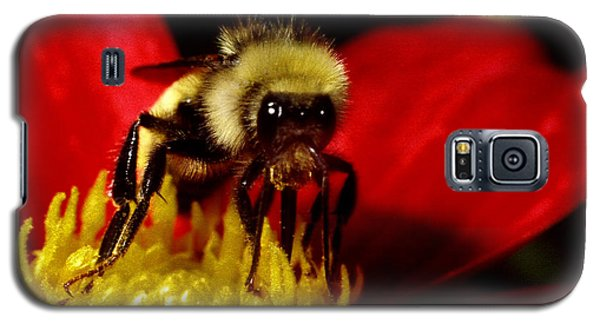 Close Up Bee Galaxy S5 Case