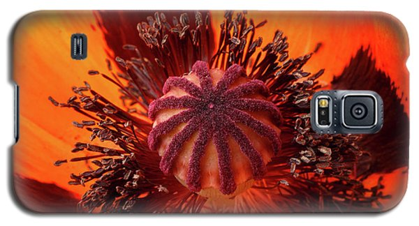 Close-up Bud Of A Red Poppy Flower Galaxy S5 Case