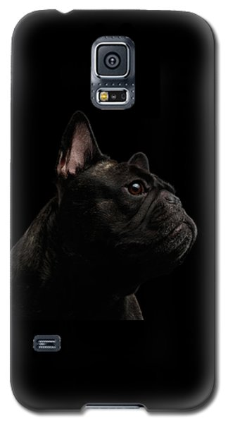 Dog Galaxy S5 Case - Close-up French Bulldog Dog Like Monster In Profile View Isolated by Sergey Taran
