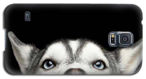Close-up Head Of Peeking Siberian Husky Galaxy S5 Case