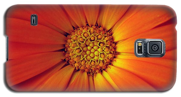 Close Up Of An Orange Daisy Galaxy S5 Case by Ralph A  Ledergerber-Photography
