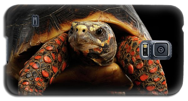 Close-up Of Red-footed Tortoises, Chelonoidis Carbonaria, Isolated Black Background Galaxy S5 Case by Sergey Taran