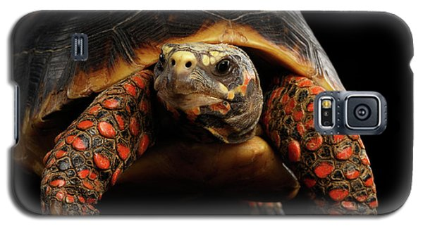 Close-up Of Red-footed Tortoises, Chelonoidis Carbonaria, Isolated Black Background Galaxy S5 Case