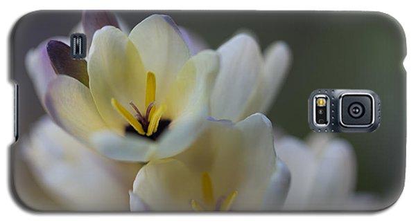 Close-up Of White Freesia Galaxy S5 Case