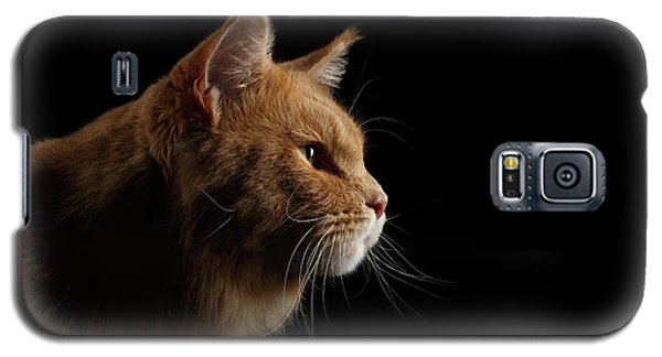 Close-up Portrait Ginger Maine Coon Cat Isolated On Black Background Galaxy S5 Case