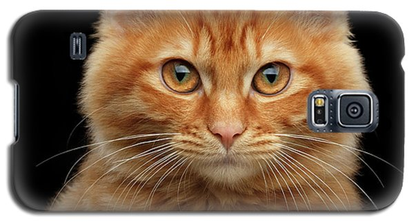 Close-up Portrait Of Ginger Kitty On Black Galaxy S5 Case
