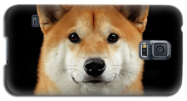 Close-up Portrait Of Head Shiba Inu Dog, Isolated Black Background Galaxy S5 Case by Sergey Taran