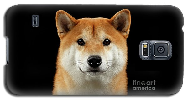 Close-up Portrait Of Head Shiba Inu Dog, Isolated Black Background Galaxy S5 Case by Sergey Taran