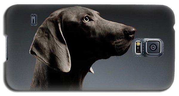 Close-up Portrait Weimaraner Dog In Profile View On White Gradient Galaxy S5 Case