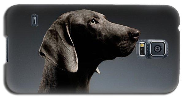 Dog Galaxy S5 Case - Close-up Portrait Weimaraner Dog In Profile View On White Gradient by Sergey Taran