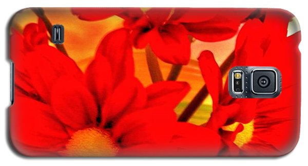 Close Up Red Gerbers Galaxy S5 Case by Marsha Heiken