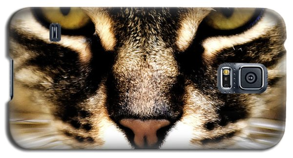 Close Up Shot Of A Cat Galaxy S5 Case