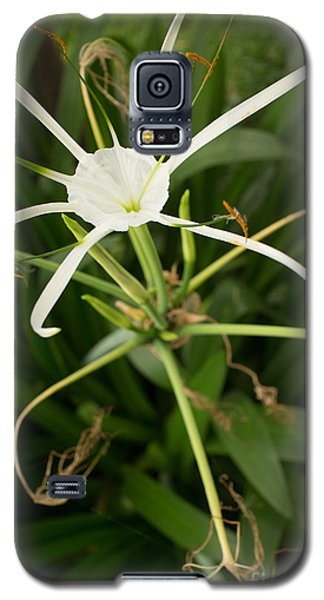 Close Up White Asian Flower With Leafy Background, Vertical View Galaxy S5 Case