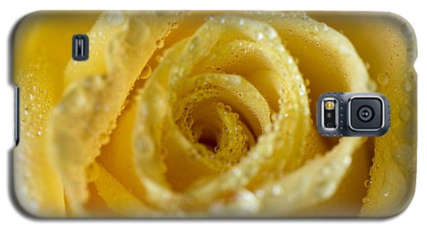 Close Up Yellow Rose Galaxy S5 Case