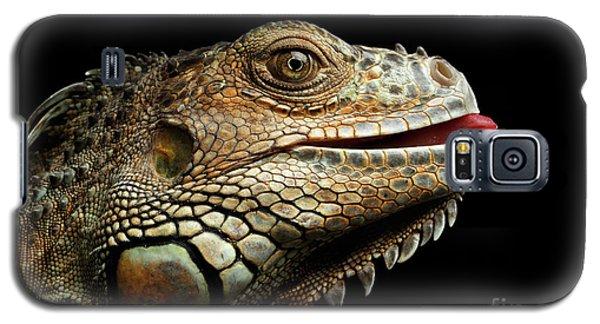Close-upgreen Iguana Isolated On Black Background Galaxy S5 Case