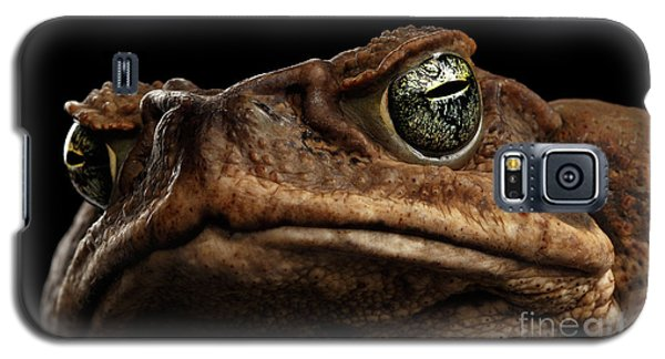 Closeup Cane Toad - Bufo Marinus, Giant Neotropical Or Marine Toad Isolated On Black Background Galaxy S5 Case