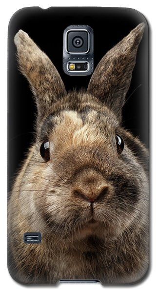 Closeup Funny Little Rabbit, Brown Fur, Isolated On Black Backgr Galaxy S5 Case