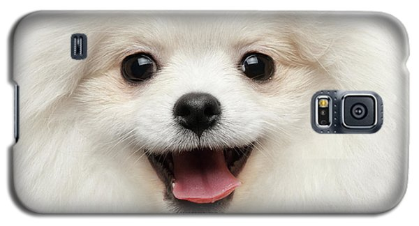 Closeup Furry Happiness White Pomeranian Spitz Dog Curious Smiling Galaxy S5 Case