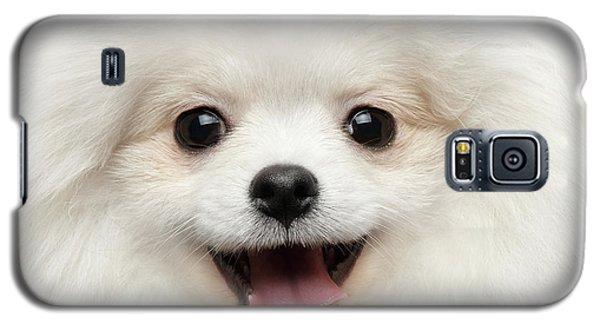 Closeup Furry Happiness White Pomeranian Spitz Dog Curious Smiling Galaxy S5 Case