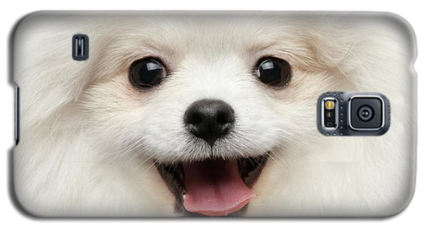 Dog Galaxy S5 Case - Closeup Furry Happiness White Pomeranian Spitz Dog Curious Smiling by Sergey Taran