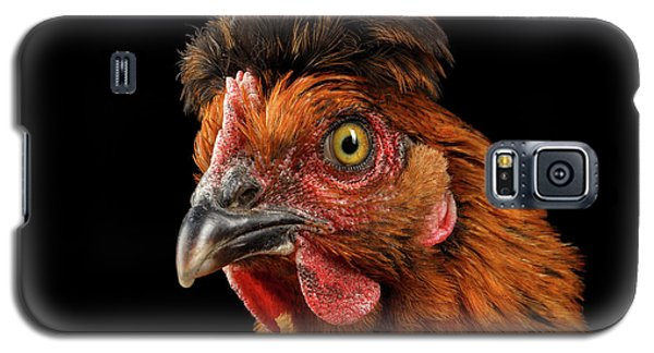Closeup Ginger Chicken Isolated On Black Background In Profile View Galaxy S5 Case