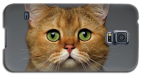Closeup Golden British Cat With  Green Eyes On Gray Galaxy S5 Case by Sergey Taran