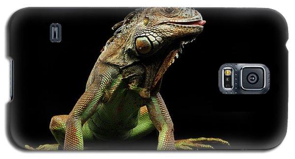 Closeup Green Iguana Isolated On Black Background Galaxy S5 Case by Sergey Taran
