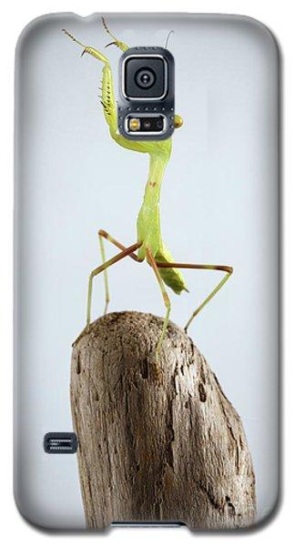 Closeup Green Praying Mantis On Stick Galaxy S5 Case