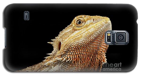 Closeup Head Of Bearded Dragon Llizard, Agama, Isolated Black Background Galaxy S5 Case by Sergey Taran
